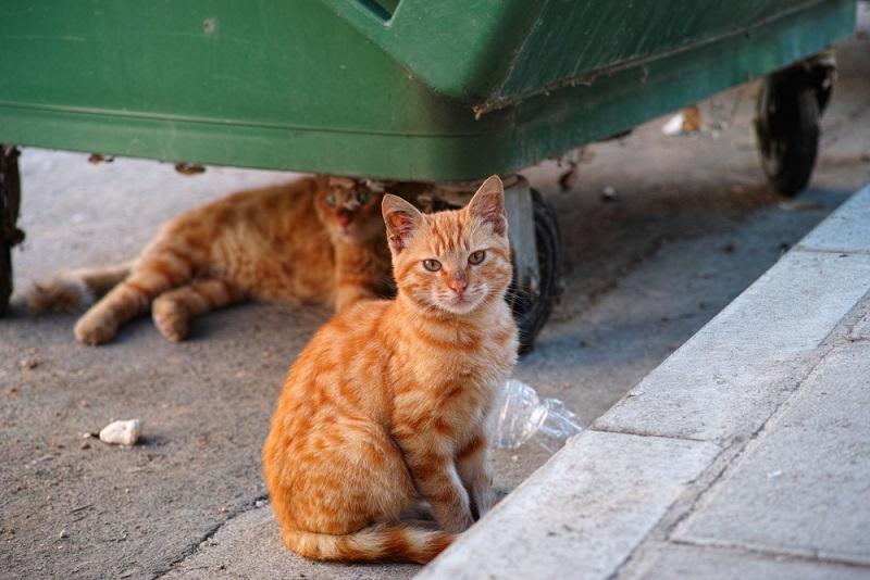 בית המשפט הוציא צו מניעה זמני לחברה המבצעת עיקור וסירוס של חתולי רחוב